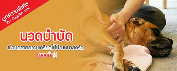 Dogilike.com :: นวดบำบัด ผ่อนคลายความเครียดให้น้องหมาสุดรัก [ตอนที่ 1]