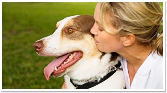 Dogilike.com :: REVIEW: ประกันชีวิตสำหรับน้องหมาสุดรัก