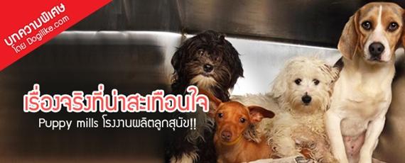 Dogilike.com :: รู้จักไหม? Puppy mills โรงงานนรกผลิตลูกสุนัข!!