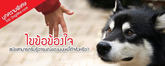 Dogilike.com :: ไขข้อข้องใจ ... สุนัขสามารถรับรู้อารมณ์ของมนุษย์ได้จริงหรือ?