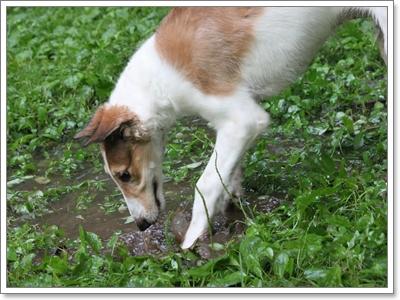 Dogilike.com :: ชวนน้องหมามาออกกำลังกายในหน้าฝน