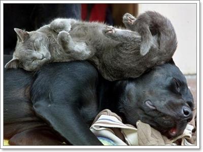 Dogilike.com :: ฝึกน้องหมายังไงให้อยู่กับน้องแมวได้
