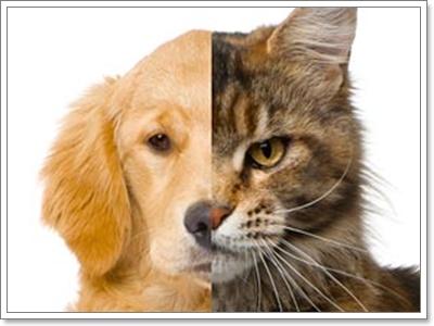 สุนัขเป็นเพื่อนกับแมวได้มั้ย