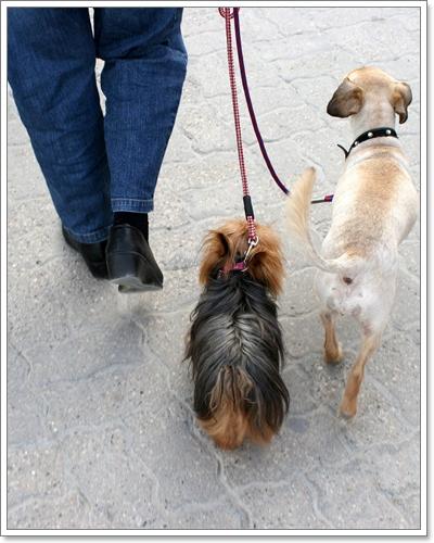 Dogilike.com :: จิตวิทยาง่ายๆ ในการฝึกตนเองให้เป็น จ่าฝูง ของสุนัข