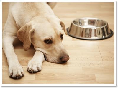 Dogilike.com :: พฤติกรรมแบบไหนที่บ่งบอกว่า สุนัข กำลังมีนิสัยก้าวร้าว?