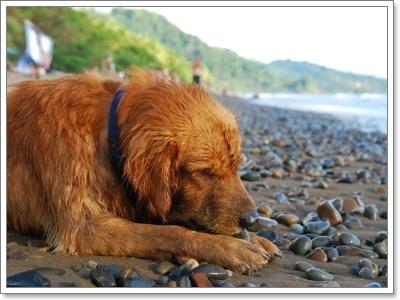 Dogilike.com :: แก้ไขพฤติกรรมสุนัขกินไม่เลือก!