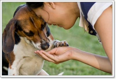 Dogilike.com :: ทำยังไง ไม่ให้สุนัขกินอาหารจาก คนแปลกหน้า