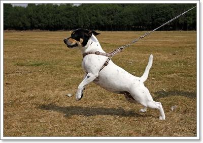 Dogilike.com :: จัดการพฤติกรรม สุดซ่าของน้องหมาพันธุ์เล็ก
