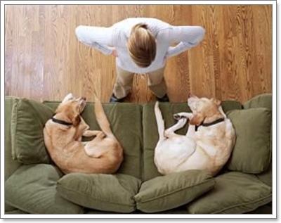Dogilike.com :: 5 พฤติกรรมน้องหมาที่เป็นปัญหามากที่สุดในปี 2012