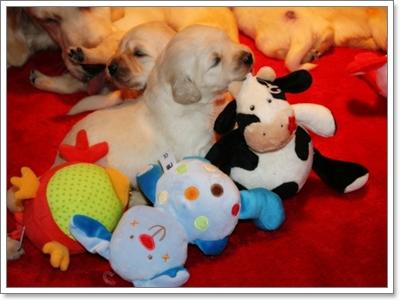 Dogilike.com :: ไขข้อข้องใจ เมื่อไหร่ที่เราควรแยกลูกหมาออกจากแม่?