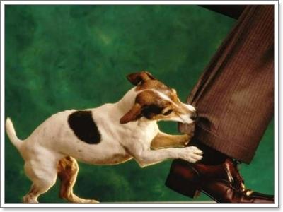 Dogilike.com :: จริงหรือไม่? คนกลัวสุนัข มักโดนกัดมากกว่าคนทั่วไป