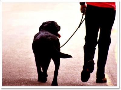 Dogilike.com :: гт╦у╗ы╖йь╧я╒ (╢ь) мбХр╖╩ем╢юяб