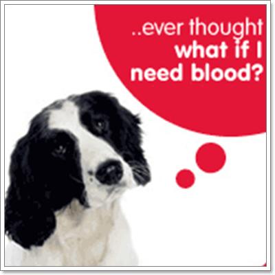 Dogilike.com :: วิกฤตธนาคารเลือดสุนัข ขาดแคลนเลือดอย่างหนัก!