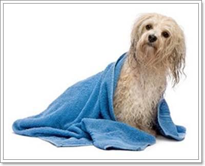 Dogilike.com :: การอาบน้ำสุนัขพันธุ์เล็กอย่างถูกวิธี