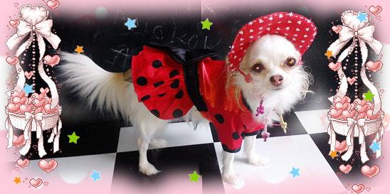 Dogilike.com :: ทำหมวกสุนัขกัน!!
