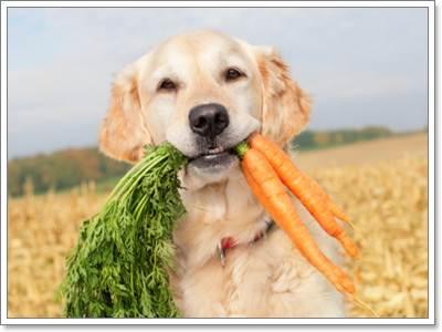 Dogilike.com ::  ผักและผลไม้ ที่มีคุณและโทษต่อสุนัข