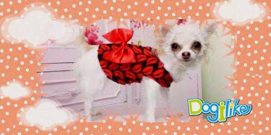 Dogilike.com :: หนูน้อยโบว์ แด๊ง แดง..