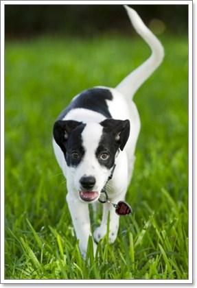 Dogilike.com :: ฮือฮา ! น้องหมาลายมิกกี้เมาส์