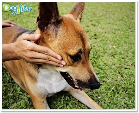 Dogilike.com ::  �����¹�ͧ��Ҵ��¡�ùǴ�����Ф� [���� 4]