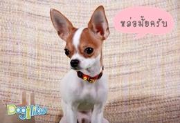 Dogilike.com :: ปลอกคอจี๊ดจ๊าด
