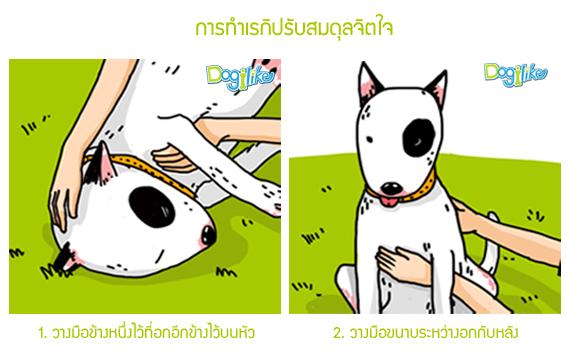 Dogilike.com :: ลงมือปฏิบัติ!!! เรกิ สัมผัสบำบัดให้น้องหมา [ตอนที่ 3]