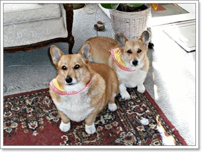 Dogilike.com :: 10 สายพันธุ์สุนัขที่เสี่ยงเป็นโรคอ้วน