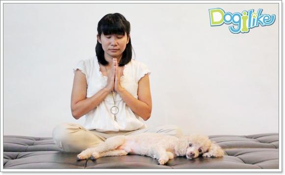 Dogilike.com :: วิธีทำเรกิเต็มรูปแบบ สัมผัสบำบัด เพื่อน้องหมาสุดรัก [ตอนที่ 4]