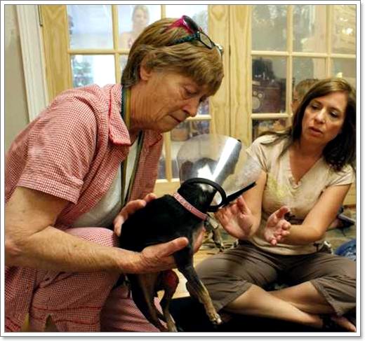 Dogilike.com :: เรกิ สัมผัสบำบัด เพื่อน้องหมาสุดรัก [ตอนที่ 1]