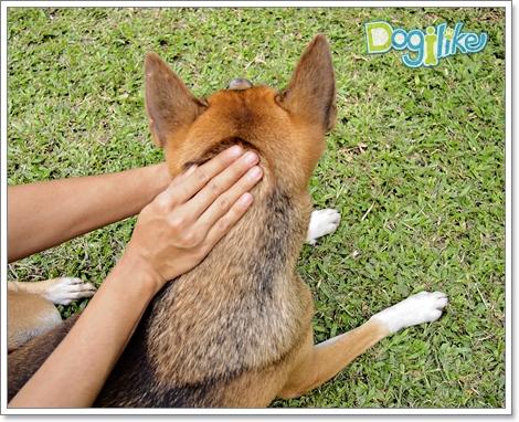 Dogilike.com :: ╪Хм╧╓ерб╧Им╖кар╢Игб║рц╧г╢кея╖АепДкеХ [╣м╧╥уХ 3]