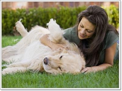 Dogilike.com :: 5 เรื่องที่ต้องรู้ ก่อนทำนวดบำบัดให้น้องหมาสุดรัก [ตอนที่ 2]