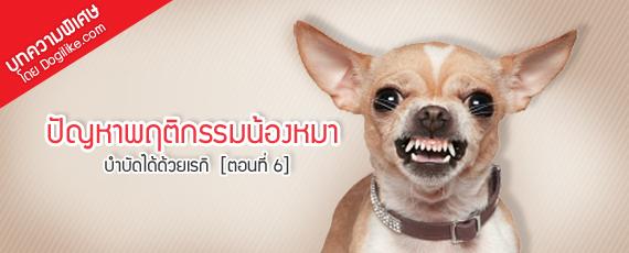 Dogilike.com :: ปัญหาพฤติกรรมน้องหมา บำบัดได้ด้วยเรกิ  [ตอนที่ 6]