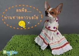 Dogilike.com :: ผ้าพันคอลาติโน่สุดเท่