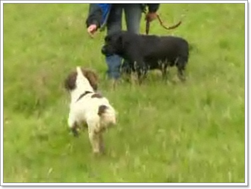 Dogilike.com :: สุนัขดมกลิ่นขาขาด เหตุติดรั้วนาน 14 วัน