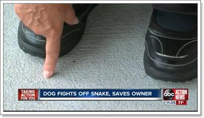 Dogilike.com :: สุดยอดฮีโร! สุนัขสู้งูปกป้องเจ้าของจนเกือบตาย