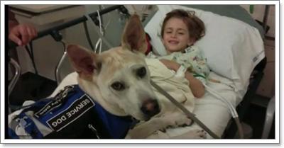 Dogilike.com :: ประทับใจ! สุนัขดมกลิ่นช่วยเด็กเส้นเลือดสมองโป่ง