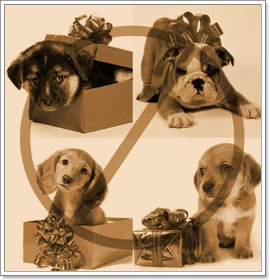 Dogilike.com :: หยุด! ค่านิยมซื้อน้องหมาเป็นของขวัญในช่วงเทศกาล