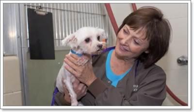 Dogilike.com :: อึ้ง! พบสุนัข 50 ตัว ถูกทิ้งวิ่งเกลื่อนถนนในสหรัฐฯ