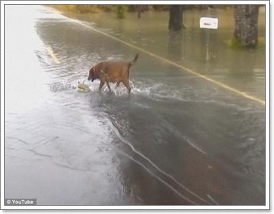 Dogilike.com :: ได้โอกาส! คลิปตูบจรจัดจับปลาแซลมอนประทังชีวิตในสหรัฐฯ