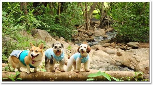 Dogilike.com :: REVIEW : หนาวปีนี้ พาน้องหมาเที่ยวที่แม่ฮ่องสอน