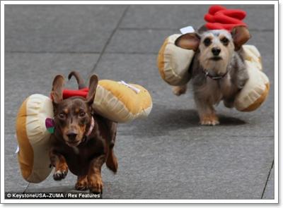 Dogilike.com :: ดัชชุนมะกันแข่งวิ่ง ร่วมฉลองเทศกาลเบียร์ใหญ่ที่สุดในโลก!