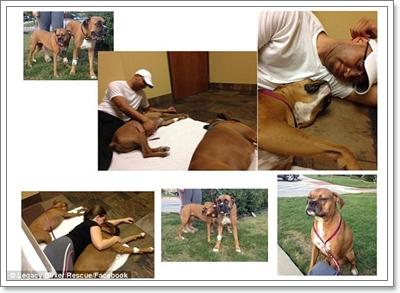 Dogilike.com :: ตร.เร่งจับเพื่อนบ้านใจโหดวางยาสุนัข เหตุรำคาญเสียงเห่า!