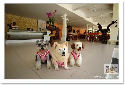 Dogilike.com :: ปีใหม่นี้...พาน้องหมาเที่ยวชิลล์ๆ ที่พัทยา