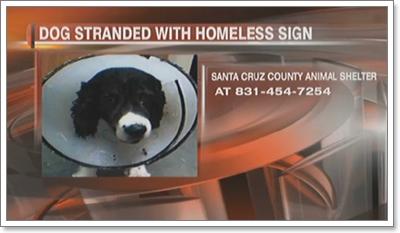 Dogilike.com :: เลี่ยงค่ารักษา! เจ้าของปัดไม่ใช่เจ้าของสุนัขป่วย