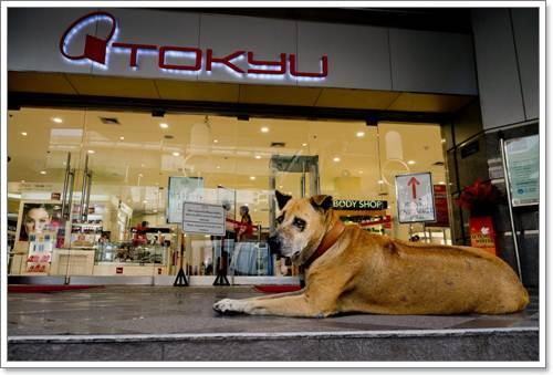 Dogilike.com :: แรมโบ้ สุนัขจรจัดที่ยังคงอยู่ในใจชาวกรุงฯ