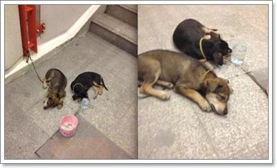 Dogilike.com :: สุนัขขอทาน! ปัญหาสังคมที่ไม่อาจมองข้าม