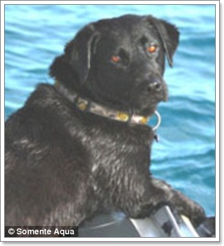 Dogilike.com :: คลิปน้องหมาว่ายน้ำเล่นกับฝูงโลมา!