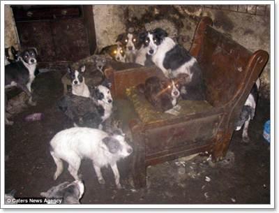 Dogilike.com :: อึ้ง! พบสุนัข แมว เกือบ 100 ชีวิตอาศัยในบ้านสกปรก