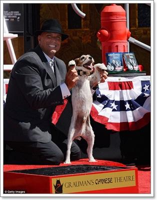 Dogilike.com :: อั๊กกี้ ตูบนักแสดงได้รับเกียรติประทับรอยเท้าที่ฮอลลิวู้ด