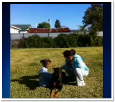Dogilike.com :: โดเบอร์แมนใจกล้า กระโดดรับกระสุนปกป้องบ้าน