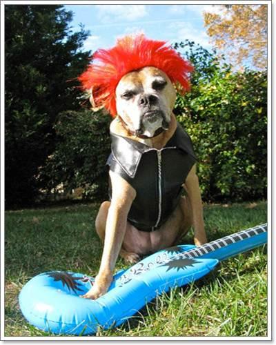 Dogilike.com :: แฟชั่นแนว Rock & Punk